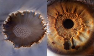 Suren Manvelyan's Photography vs The Universe in Our Eyes